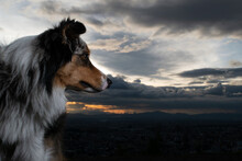 Horse In The Sky