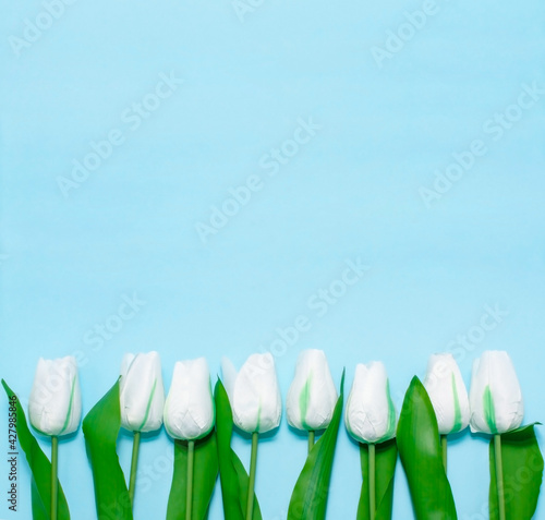 Floral pattern made with white tulips on the blue background. Minimal spring flower concept. Easter, Woman day, mother day, birthday, wedding greeting card. Copyspace for text, flatly, banner. Wall mural