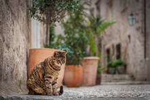 Dubrovnik Cat It's Easy To See Why Cats Love Dubrovnik. The Narrow Streets And Steep Stairways Lead To Convenient Nooks And Crannies That Are Perfect For Cats To Run, Hide, And Climb