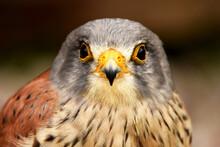 Bird Of Prey Close Up