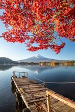 Mount Fuji Seen From Lake Kawaguchi In Autumn, Yamanashi Prefecture, Japan