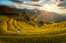 Scenic View Of Terraced Fields With Woman By Plants Against Sky During Sunrise