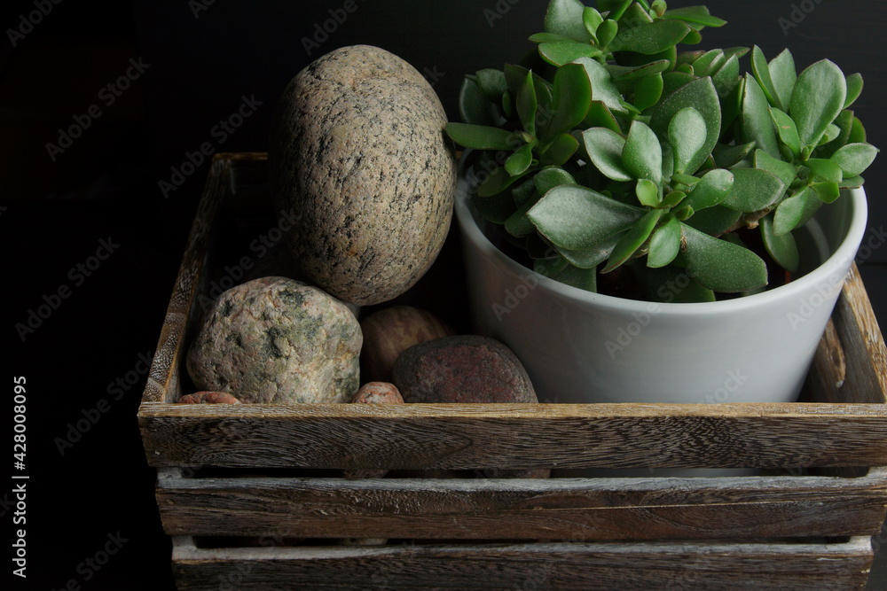 Fototapeta zielona roślina dekoracyjna kamienie rzeczne