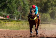 Last 200 Meters At The Mendoza Racecourse In What Was The First Post-pandemic Race.