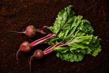 Ripe Fresh Beet Root On Black Ground Background