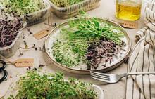 Fresh Microgreens Salad On Beige Stone Backgrund. Healthy Food Concept.