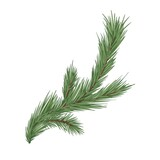 Spruce, fir or pine tree branch with evergreen needles isolated on white background. Fresh forest coniferous sprig. Fluffy twig of winter plant. Realistic hand-drawn vector illustration
