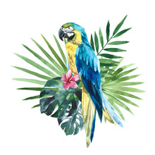 Watercolor Yellow Blue Macaw Parrot, South American Parrot With Tropical Palm Leaves. Hand Drawn Illustration, Clip Art Isolated On White Background