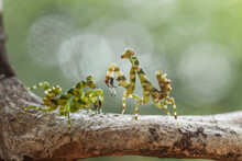 Mantis Spesies On Unique Place