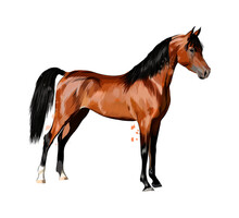 Horse From Splash Of Watercolors. Hand Drawn Sketch. Vector Illustration Of Paints