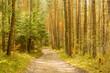 Leśna droga wśród drzew  wczesną wiosną