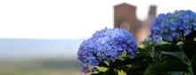 Lilac Hydrangeas In The Foreground In The Background, Out Of Focus, Hilly Landscape With Old Building.