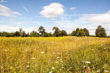 A Field Of Wild Flowers And Trees In Southern England