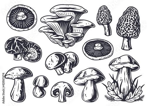 Obraz na plátně Mushroom picking of morel