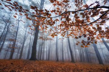 Las - jesień