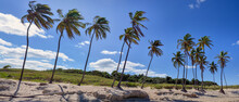 Panoramic View Of Palm Trees On A Beach With Blue Sky. Tropical Scene With Palm Trees Blowing In The Wind. Vacation Destination For Relaxation.