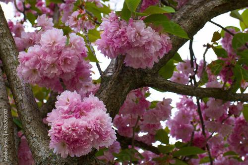 Fototapeta kwiat roślina natura płatki makro orzyroda wiosna obraz