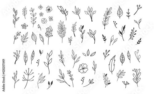 Fototapeta Hand drawn floral elements. Swirls, laurels, arrows, leaves, flowers and branches. Doodle botanical elements. obraz