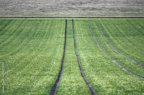 Farmland - fototapety na wymiar