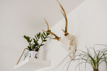 Closeup Shot Of A Room Interior With Plants And A Scull Of Animal