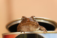 Close Up Of A Frog