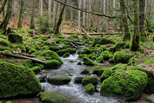 Narrow River Surrounded By Trees And Rocks Covered In Mosses In A Forest
