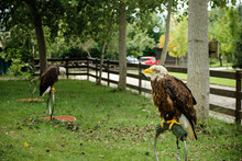 Vertical Shot Of Bald Eagles On A Ring Perch At Cabarceno Natural Park In  Cantabria, Spain