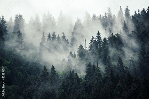 Fototapeta Misty mountain landscape obraz