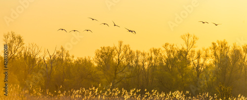 Photo Flock of geese flying in a bright blue yellow sky over nature in  sunlight at su