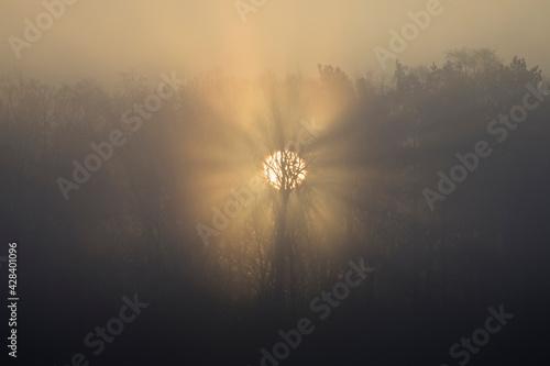Fototapeta promienie słońca przebijające się przez las obraz