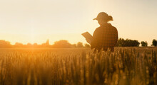 Woman Farmer With Tablet In A Wheat Field. Sunset.