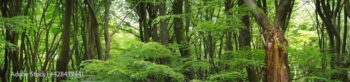 Obraz na plátně Veluwe national park, the Netherlands