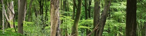 Εκτύπωση καμβά Veluwe national park, the Netherlands