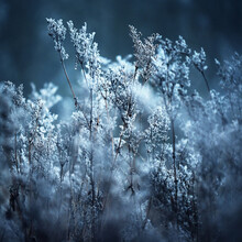 Forest Floor Of Dry Plants In A Hoarfrost, Close-up. Morning Fog. First Snow In Autumn. Seasons, Climate Change, Ecology. Macro Photography