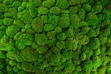 Beautiful Decorative Bun Moss Texture.