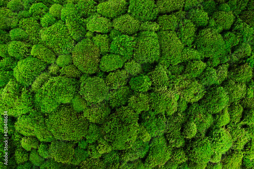 Obraz na plátně Beautiful decorative bun moss texture.