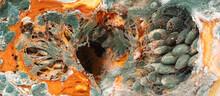 Orange Moldy Cut Pumpkin, Mold And Mushrooms On Food, Mold Development, Frequent Problem