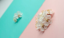 Close Up Of Apricot Blossom On Diagonal Pink, Blue And Grey Pastel Background