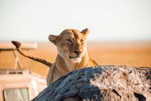 Wildlife Pictures Captured At Serengeti Nationalpark