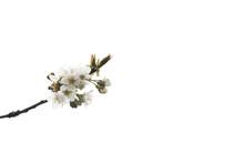 Frühling 9
