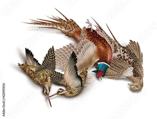 Fényképezés oiseau, bécassedes bois, faisans, nature morte, la chasse, en vol, tiré, nature,