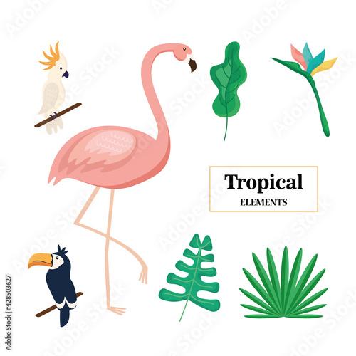 Fototapeta premium three tropical animals