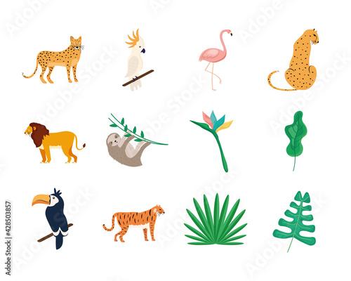 Fototapeta premium eight tropical animals