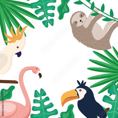 Fototapeta premium tropical animals frame
