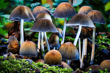 Closeup Of Wild Fungi In A Forest Under The Sunlight With A Blurry Background