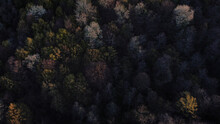 Beautiful Aerial View Of The Thick Trees Growing In The Forest On A Rather Gloomy Day