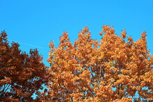 Bright Charming Multicolored Early Autumn