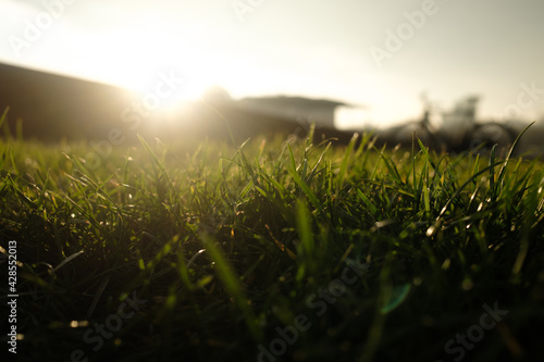 Leinwand Poster out of focus green grass in a park in warm back light