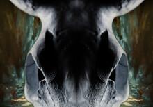 Cow's Skull Art