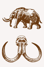Graphical Set Of  Mammoth  Walking And Skull ,sepia Background, Vector Elements,fossils